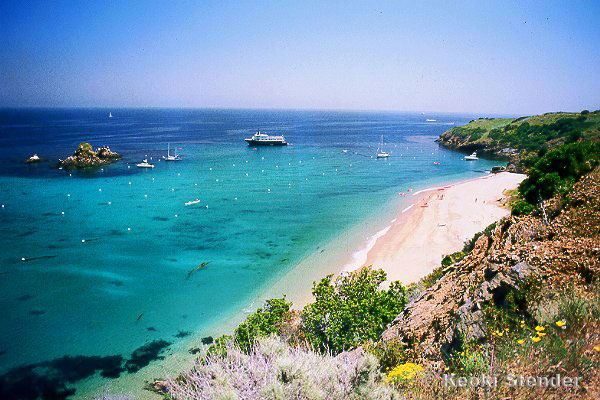 Diving in southern california for Catalina bay