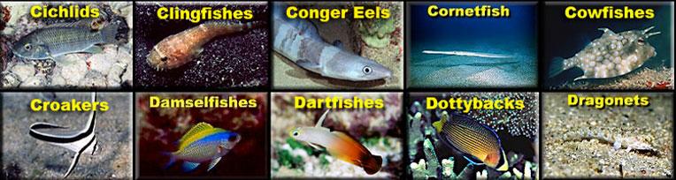 Fishes index for Edible hawaiian fish