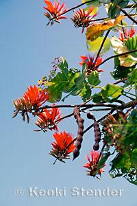 Fabaceae Bean Or Legume Family