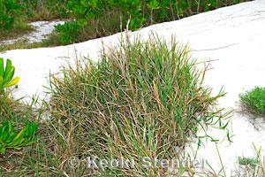 Invasive Weeds Of Hawaii